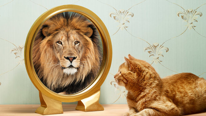 201405-omag-lion-949x534